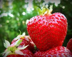 HBW- Happy berry Wednesday (Sue323 :-)) Tags: strawberry strawberries mansikka mansikoita red punainen bokehwednesday bokeh macro green easternfinland kerimki anttola finland suomi kes outdoor naturallight canon canonpowershota710is sue323 marialaakso summer laakso images sue maria
