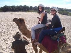 CIMG0321 (Queenbean79) Tags: beach camels portmacquarie