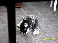 Mis regalones (nibsonec) Tags: pets gatos perros mascotas mascotaschilenas