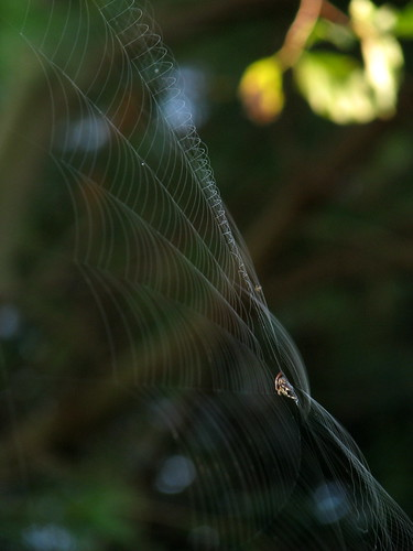 billowing morning web