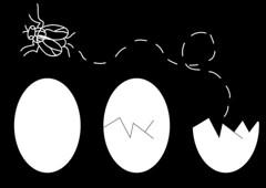 mosca (Pedro Ernesto F) Tags: illustration fly egg humor surreal ilustrao mosca ovo surrealismo cartun inslito