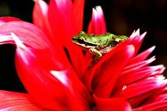 froggyshopped