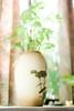 白蘿蔔~* (YENTHEN) Tags: window 35mm nikon f14 vase nikkor shizuka d80 35mmf14ai yenthen nikkor35mmf14ai