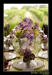 Hamptons Engagement and Wedding (brian dorsey studios) Tags: flowers wedding summer vineyard claire hamptons couple estate purple orchids bean vogue vineyards stunning casual violets sagaponack viin wolffer