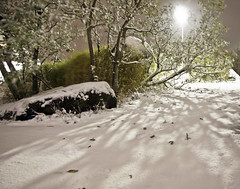 First Snow (Elsa Prinsessa) Tags: winter light white snow tree nature iceland shadows purple reykjavik snowing mystique theunforgettablepictures elsaprinsessa elsabjrgmagnsdttir