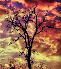 Sky on Fire (Jeff Clow) Tags: sunset storm tree nature weather silhouette clouds twilight texas dfw jeffclow impressedbeauty jeffrclow