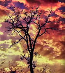 Sky on Fire (Jeff Clow) Tags: sunset storm tree nature weather silhouette clouds twilight texas dfw jeffclow impressedbeauty ©jeffrclow