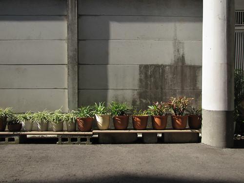 Tokyo Plant Pots 089  東京植木鉢 by tsuyatsuya.