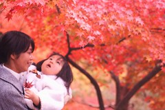 mom,I wanna more leaves! (*setsuna) Tags: red japan canon leaf maple kyoto sigma outoffocus momiji sof  toufukuji
