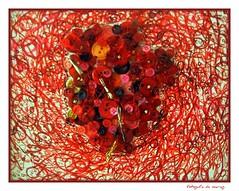 Coração com mau feitio (mariag.) Tags: portugal maria lisboa alexandra coração 2008 mau ccb mesquita feitio ilustrarportugal