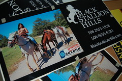 Black Stallion Hills Sign. (Blackstallionhills.com) Tags: horses horse woman costa black girl sign project model paradise creative rica hills add eco stallion