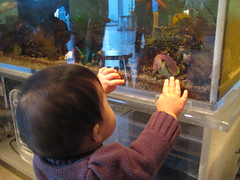 Aki looking at hermit crab and sea star