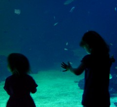 Two girls and one aquarium (Peter D..) Tags: girls two water childhood silhouette kids sisters gteborg children one aquarium imagination curious ih smrgsbord universeum cotcpersonalfavorite mywinners copyrightallrightsreserved newacademy flickrestrellas rubyphotographer peterdejeborn