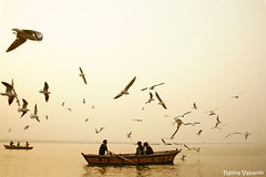 Awakening (flavita.valsani) Tags: family people seagulls india river dawn boat awakening explore varanasi 59 ganga ganges benares holycity ndia explorefrontpage valsani lettheriverrun letallthedreamerswakethenation goodmorningvaranasi