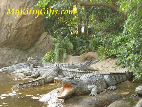 Hello Kitty meeting Crocodiles in Adventureland, Hong Kong Disneyland
