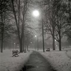 haze and glow (Jösé) Tags: park trees light blackandwhite bw snow toronto 6x6 film rain fog mediumformat square dof kodak bokeh tmax benches yashica cabbagetown mat124g 100tmx 75min riverdaleparkwest