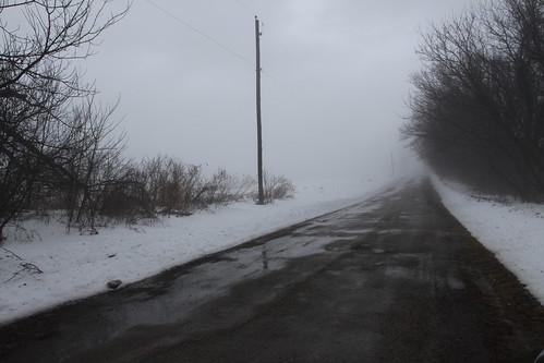 Foggy Bird Count