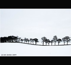 An Undulation of Winter Trees - Tayside - Scotland (Magdalen Green Photography) Tags: christmas trees snow tree nature landscape scotland cool scottish undulation tayside winterscene scottishlandscapes calmnaturescene iaingordon anundulationofwintertrees