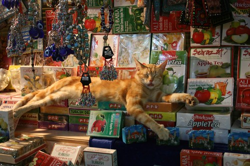 Grand (and lazy) cat in the Grand Bazaar