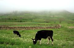 Gorni Village |   (P A H L A V A N) Tags: photo iran iranian pars  sina   irani farsi  fars parsi daregaz   kazem   dargaz   pahlavan
