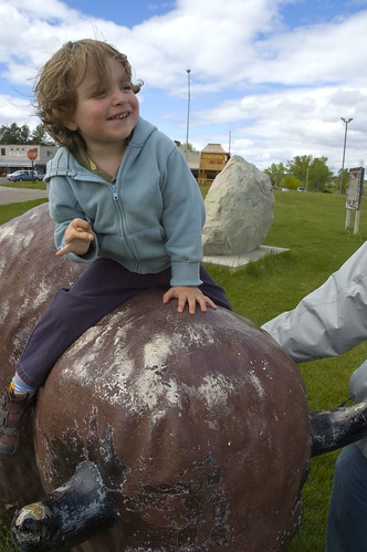 riding the small buffalo