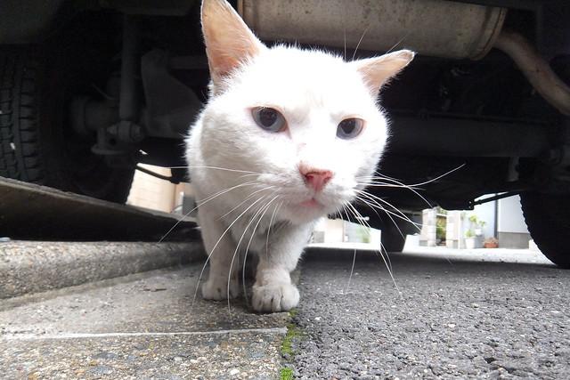 Today's Cat@2011-05-27