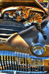 A Tiger In Your Engine (marcovdz) Tags: auto car engine fluffy voiture cuddly tigre hdr desoto peluche moteur 3xp