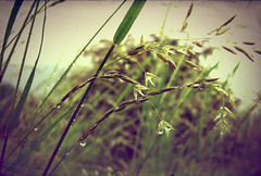 And you'll finally See (AndreaUPl) Tags: wood tree texture grass rain drops andrea erba wa waterdrops albero acqua pioggia bosco goccia spighe pedretti rametto goccie andreaupl
