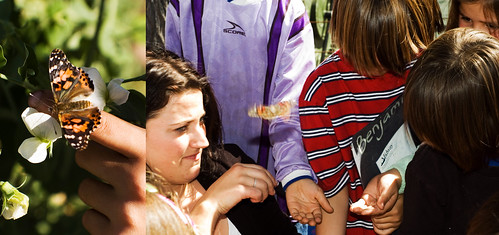 Kates_butterfly_release