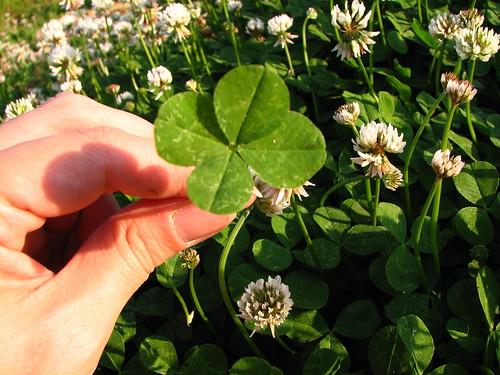 lucky 4 leaf