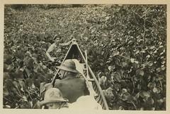 Reeve 60857 hyacinth