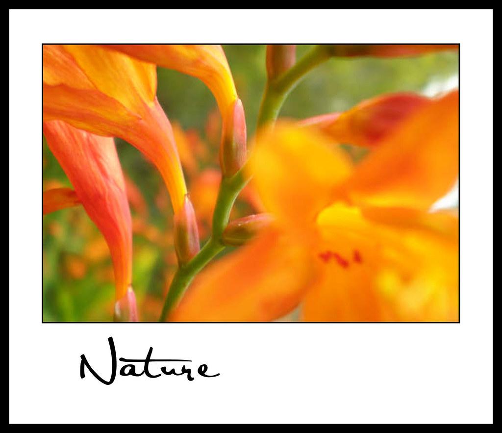 Nature_Andrea B 01