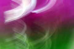 i've just seen a face (mindmanifesting) Tags: pink two green modern one purple magic violet mind mysterious blah lime magical become chemical rx reaction transformed romace mindbending carljung manifesting mmhome colourartaward artlegacy mindmanifesting mindmanifestingphotography