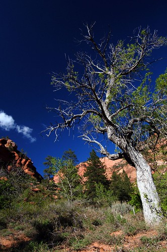 Tree in Kolob Canyon.