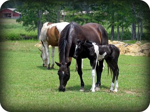 New Foal-1