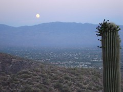 moonrise (azhiker_grrl) Tags: sunset arizona moon nature desert tucson hike fullmoon saguaro sabinocanyon blackettsridge