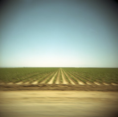 central valley drive-by (lawatt) Tags: blur green 120 film holga kodak farm driveby rows crops agriculture portra centralvalley 160nc