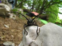 18 чудо жук