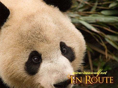 Panda Droopy Eyes