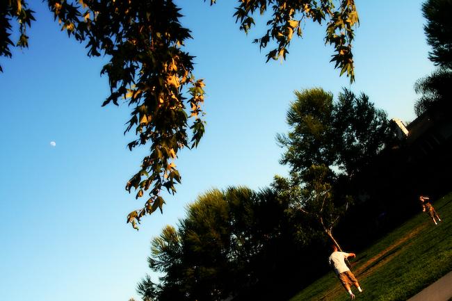 Frisbee by Moonlight