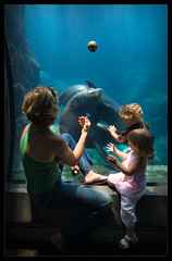 Family Fun (Edd Noble) Tags: family light ball aquarium nikon lions nikkor f28 d3 1424mm pacificlong beachlacasea