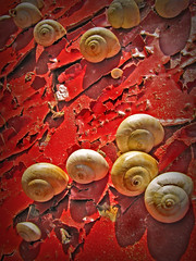 Exode rural. (Jean-Marc Valladier) Tags: red rouge rojo rust snail rosso rouille escargots platinumphoto anawesomeshot flickrdiamond colorsinourworld