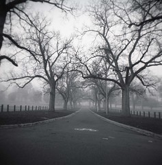 Bleak (dave.carswell) Tags: morning winter cold fog freezing australia melbourne yay bleak mcg jolimont holga120cfn filmscanner treeporn ilfordsuperxp2 epsonv500