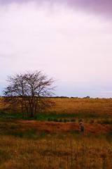 Noel in the field