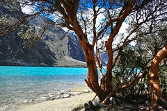 Arbol de Quenual (Davis) Tags: parque color peru de arbol agua bella laguna tours 2008 eos350d nacional canos ancash huascaran yungay 3800 llanganuco msnm turqueza quenual