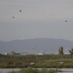 Llobregat Delta Nature Reserve