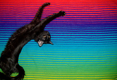 proyecto miau (checoo) Tags: sleeping arcoiris cat blackcat rainbow sleep hipster highcontrast stretch gato stretching dormido gatonegro