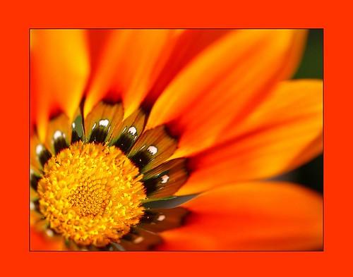 amazing flower colors