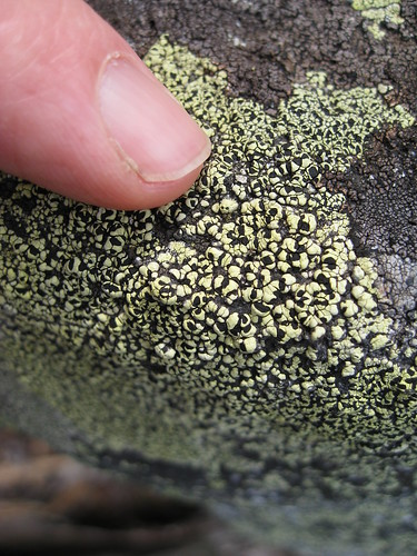 Map Lichen?? on rock - Mason Lake by brewbooks.