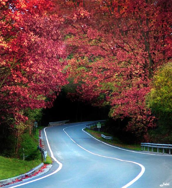 Carretera sinuosa 5